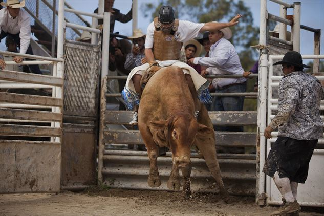 Top rodeo facts to know